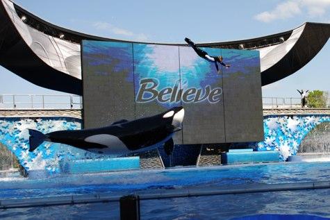 seaworld shamu believe jump