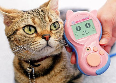 Meowlingual Cat Translation Device