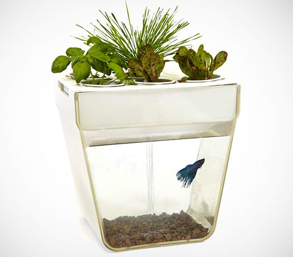 aquafarm aquaponics fish garden thinkgeek
