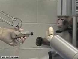 Monkey with Robotic Arm