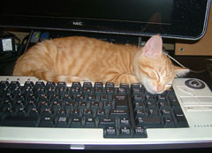catnap on computer
