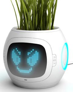 Junyi pet plant