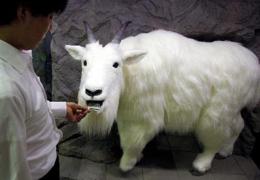 Robo-Goat