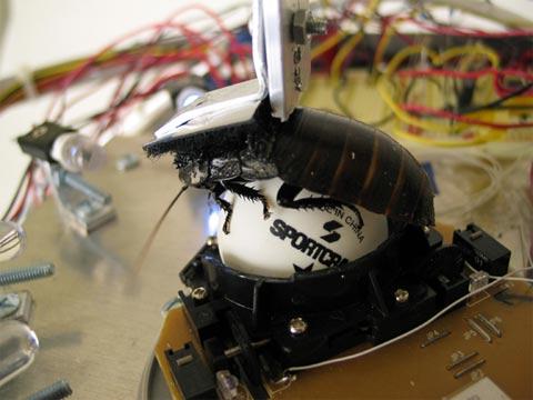 Robot Roach