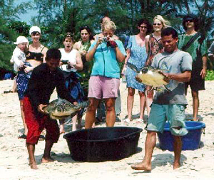Saving Sea Turtles
