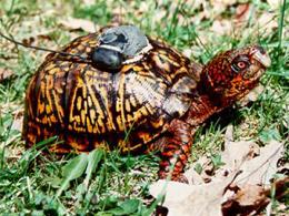 Turtle Narc