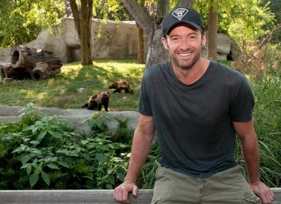 Hugh Jackman with wolverines