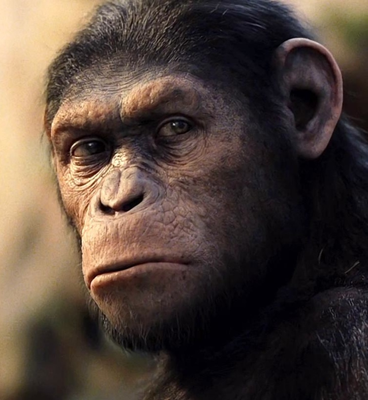 Rise Of The Planet Of The Apes / Caesar
